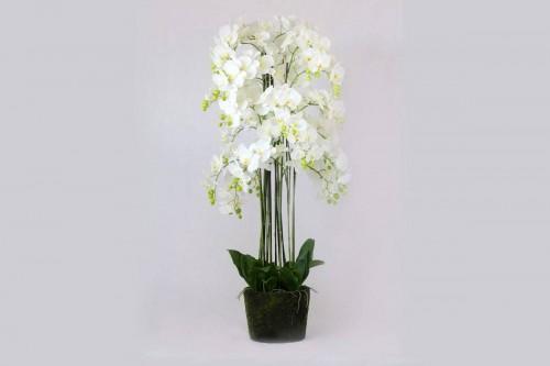 Pianta Orchidea Phalaenopsis Bianca a 186 Fiori Artificiale Real Touch Altezza 150 cm