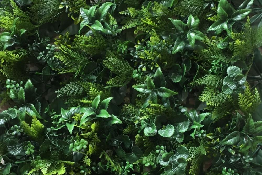 parete vegetale 02