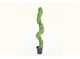 Pianta Topiaria a Spirale, altezza 150 cm.