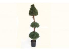 Pianta Topiaria di Cipresso, altezza 150 cm.